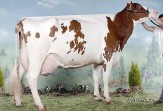Red Holstein Promotion